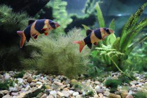 Top 5 Freshwater Bottom feeder Species