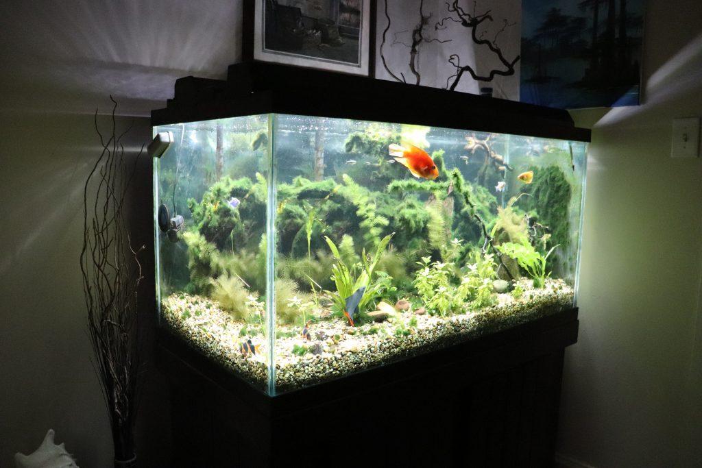 120 gallon fish tank