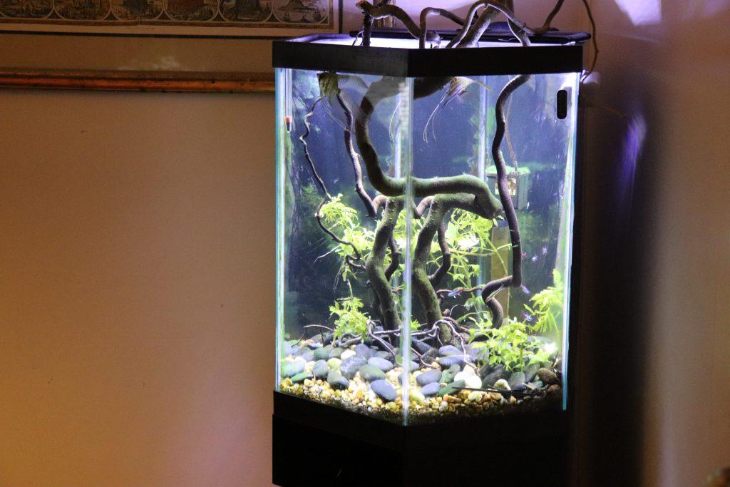Hexagonal corner fish tank